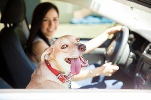 car dog happy